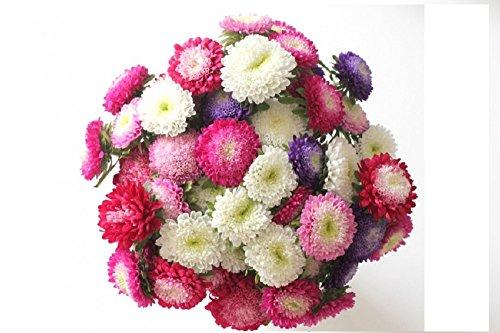 Lot de 100 graines de Reine Marguerite - mélange pour bouquet - annuelles