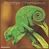 Panther Chameleon 2021 Wall Calendar: Official Panther Chameleon Calendar 2021, 18 Months