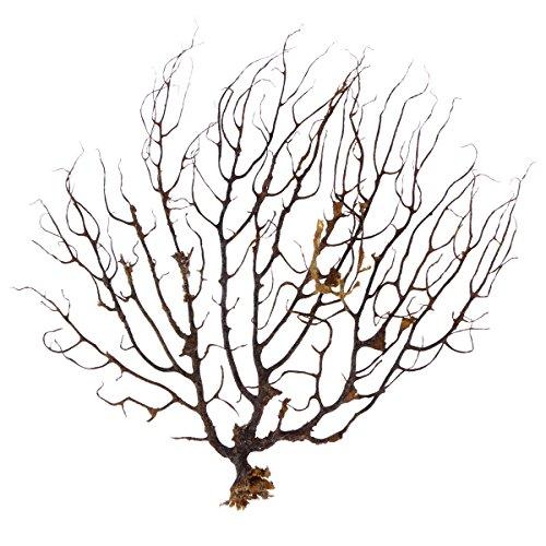 Natürliche, schwarze Korallen-Dekoration für Aquarien von UEETEK, für Meeresfans, Korallendekoration