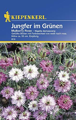 Blumensamen Jungfer Grünen Mulberry