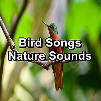 Bird Songs Nature Sounds