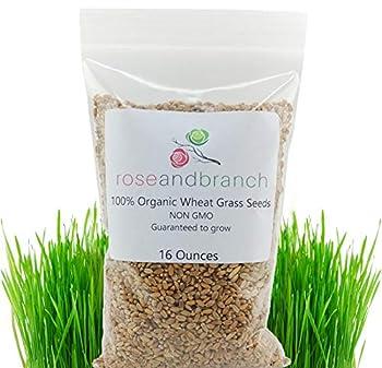 Best organic cat grass seeds Reviews