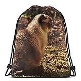 Yuanmeiju British Shorthair Cat Pet Play Custom Drawstring Shoulder Bags Bolsa de Gimnasio Mochila de Viaje Lightweight Gym for Man Women 16.9'x14'