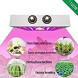 Geführte Betriebslampe LED Pflanzenwachstumslicht 1100w Pflanzenlichter Verkürzen Sie den Wachstumszyklus Gewächshaus Hydroponic Pflanzenwachstumslampe Pflanzenwachstumslampen Mit verstellbarem Licht