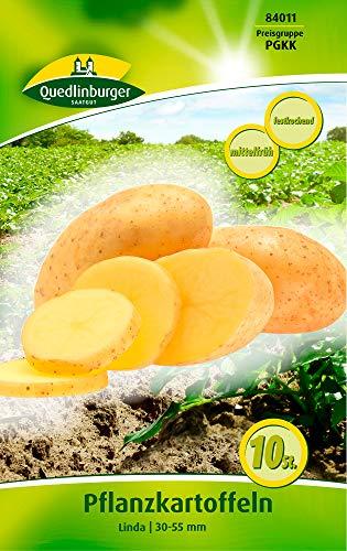 Quedlinburger 84011 Kartoffel Linda (10 Stück) (Pflanzkartoffeln)