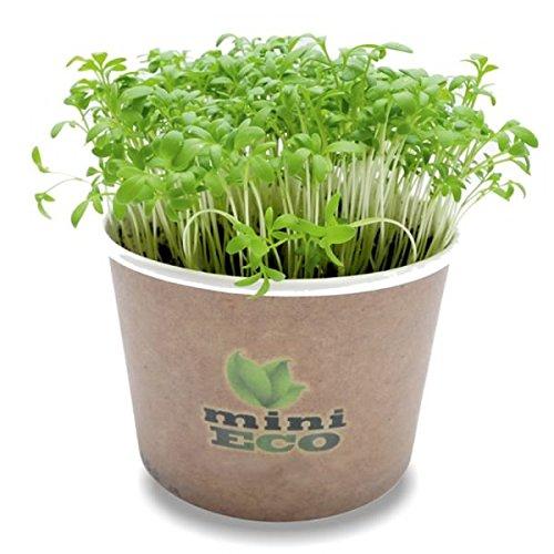 Cresson de Jardin Micro-pousses Graine à Germer Bio. Environ 4000 Graines. Cultivez Vos Herbes Fraîches Sur Rebord de Fenêtre. Plantules Grandir Cultiver Croissante Légume Végétal Germes Microgreens