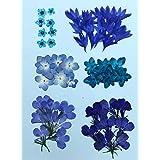 【お花屋さんの押し花セット ブルー小花Mix】人気のお花をチョイス 八重あじさい ロベリア こでまり 矢車草
