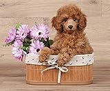 Poodle Dog in a Basket Fleece Throw Blanket 50' x 60'