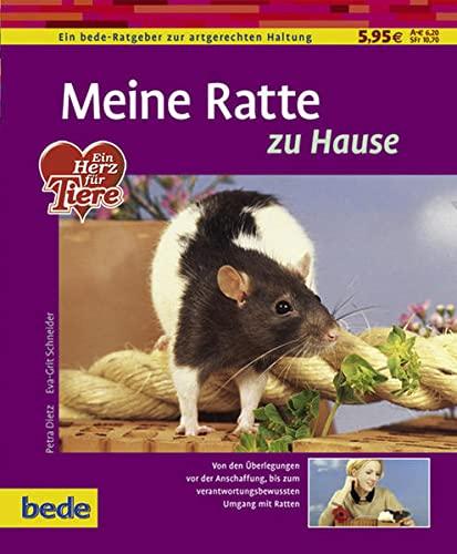 Meine Ratte zu Hause: Von den Überlegungen von der Anschaffung, bis zum verantwortungsbewussten Umgang mit Ratten
