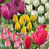 100x bulbes de fleurs - Mélange « Happy Bees » | Crocus, Iris, Aconit d'hiver, Narcisse, Tulipe | Plantes fleuries vivaces | Bulbes de fleurs à planter