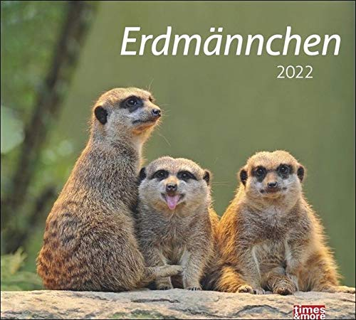 Erdmännchen Bildkalender 2022 - times&more Tier-Kalender - Wandkalender mit Monatskalendarium - 30 x 27 cm