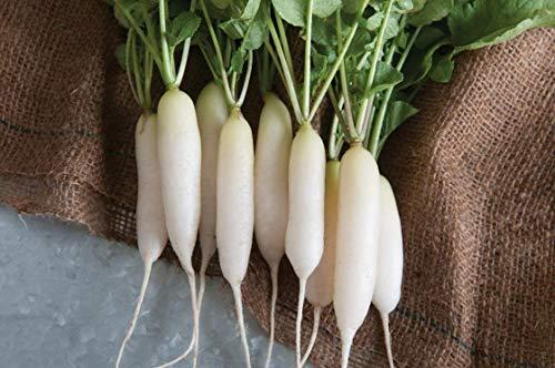Fash Lady 3g Semillas de carámbano Blanco Radish Herencia no transgénica