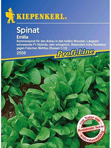 Spinat Emilia F1 Sommerspinat resistent