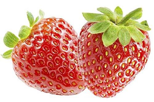 2 Pflanzen Erdbeere Elsanta - Fragaria Elsanta - Topfgewachsen