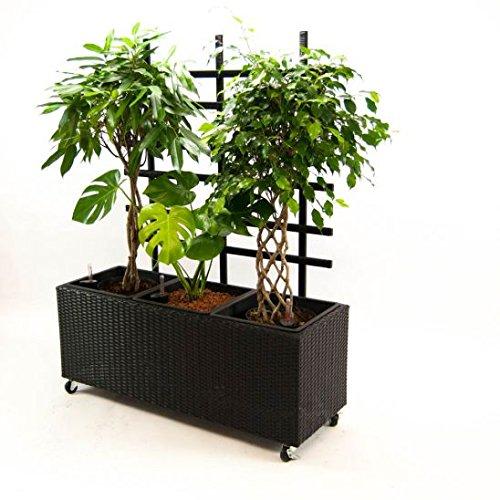 Blumentrog Pflanztrog Raumteiler Polyrattan mit Rankgitter Rechteck LxBxH 82x30x100cm schwarz