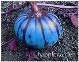 SANHOC 20 pz Zucca Decorativa Bonsai Heirloom di Verdure Bonsai Home Grown Cucurbita Pepo Turco Turbante Zucca Bonsai Giardino delle Piante: 17