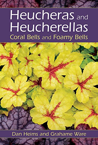 Heucheras and Heucherellas: Coral Bells and Foamy Bells