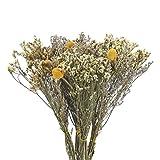 XHXSTORE 4pcs Flores Secas Eucalipto y Craspedia Amarillas Ramos de Flores Seca Naturales Decoracion para Ramo de Boda Mesa Manualidades Fiesta Navidad Otoño Hogar Jarrones