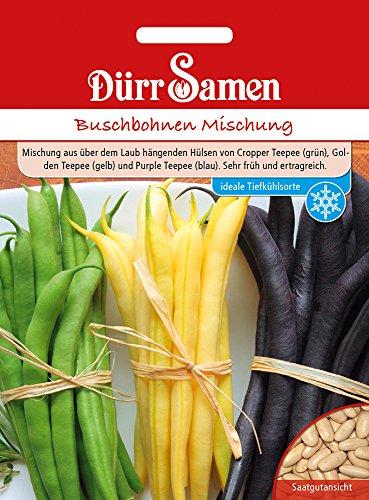 Dürr Samen 4347 Buschbohne grün-, gelb- & blauhülsige Buschbohnemischung (Buschbohnensamen)