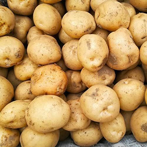 じゃがいも 北海道 男爵 いも 10kg L サイズ ジャガイモ 農協 共選 送料 無料