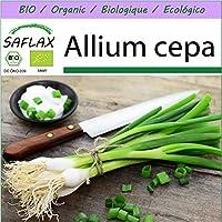 SAFLAX - Ecológico - Cebolla de primavera - Cebolla de Lisboa blanca - 150 semillas - Allium cepa