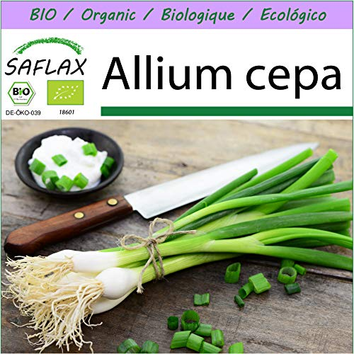 SAFLAX - BIO - Frühlingszwiebel - Weißer Lissabonner - 150 Samen - Allium cepa
