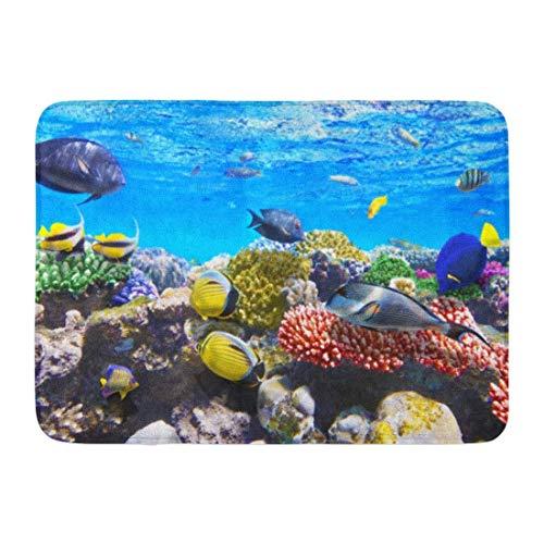 Fußmatten Badteppiche Outdoor/Indoor Fußmatte Aquarium Korallen und Fische im Roten Meer Ägypten Scuba Hurghada Under Bathroom Decor Rug Badematte