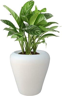 Yuccabe Italia Max Round 13 Inches Planter