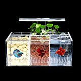 Betta Fish Tank Aquarium Material acrílico Mini pecera de Escritorio Kit de Cuencos con Bomba de Agua y Luces LED Autocirculación Tanque ecológico Sala de Aislamiento de Peces Enfermos (3 Rejillas)