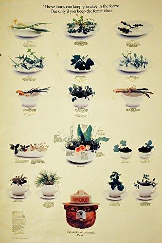 Het Museum Outlet grafieken van - Eetbare Bosplanten - A3 Poster Print