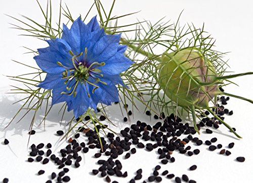 Schwarzkümmel Nigella sativa 250 Samen