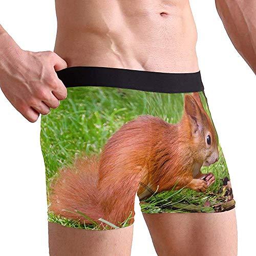 Animal World Squirrel Roedor Búsqueda de Comida Calzoncillos Boxer para Hombre Ropa...