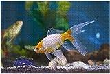 Fotos de stock de peces de acuario marino submarino de langosta, rompecabezas grandes de 500 piezas para adultos, juguete educativo para niños, juegos creativos, entretenimiento, rompecabezas de made