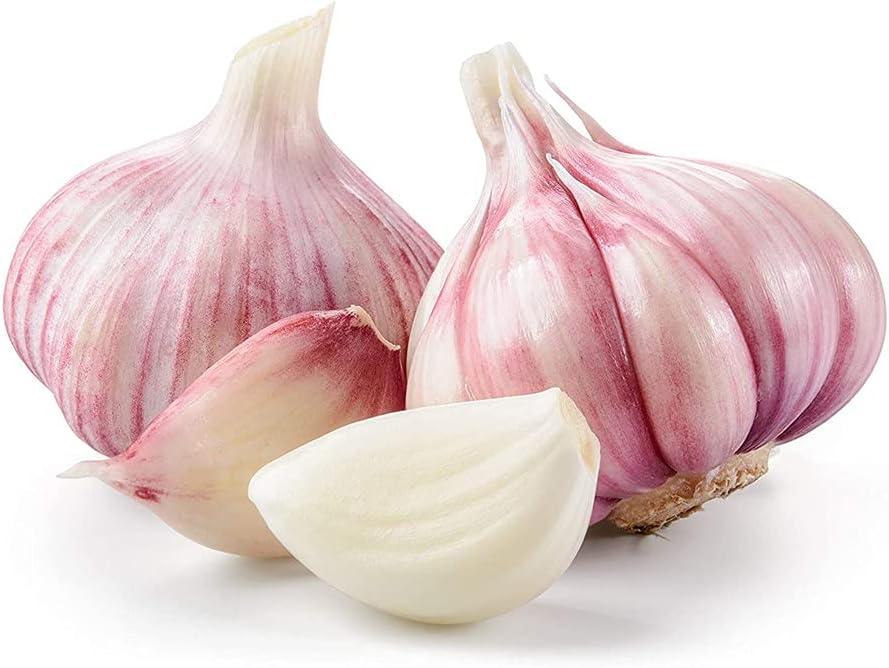 NEW Garlic Bulbs Impressive Garden Seasoned Decoration Sales results No. 1 Fresh