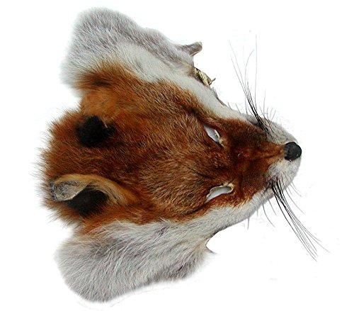 Ensuite Fuchskopffell vom Rotfuchs, als Accessoires, für Deko, Basteln, ca. 17x19 cm, Rotfuchs Kopffell