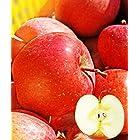 山形産 サンふじ りんご 5kg 約25~30玉前後 訳あり ご家庭用