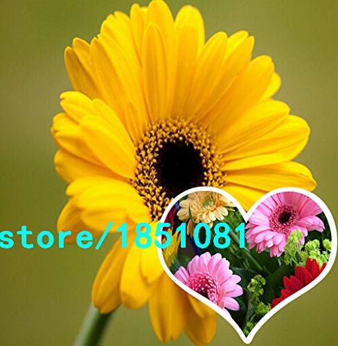 Pinkdose 100pcs / pack romantique et belle artificielle colorée fleur Gerbera mariage Party Fit For Accueil Boutique Bureau Décorations: multi-couleur