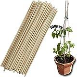 Bastoncini Di Supporto Per Piante 100 Pezzi Staffa Anticaduta Bastoncini Bambù Canne Da Giardino Vegetale Supporto Per Piante Curvo Aiuto Della Vite Pomodoro Per La Produzione Treppiedi Da Giardino