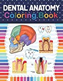 Dental Anatomy Coloring Book: Fun and Easy Adult Coloring Book for Dental Assistants, Dental Students, Dental Hygienists, Dental Therapists, Periodontists and Dentists. Dental Assisting Notes.