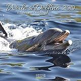 Wale und Delfine (BK) 225619 2019: Broschürenkalender mit Ferienterminen. Tierkalender von Fischen. 30 x 30 cm