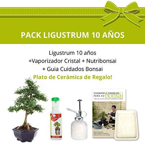 CENTROBONSAI Pack Bonsái 10 años Ligustrum