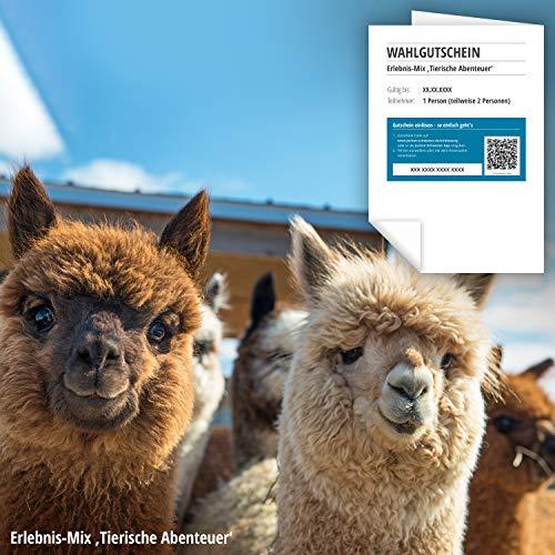Jochen Schweizer Erlebnis-Gutschein Tierische Abenteuer, über 40 Erlebnismöglichkeiten