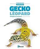 Gecko léopard: Eublepharis macularius