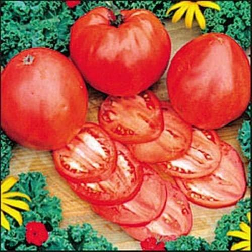25 graines de coeur Heirloom hongrois tomate