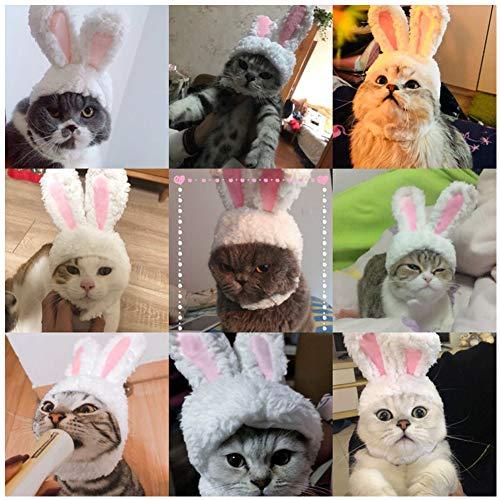 Cat Rabbit Hat