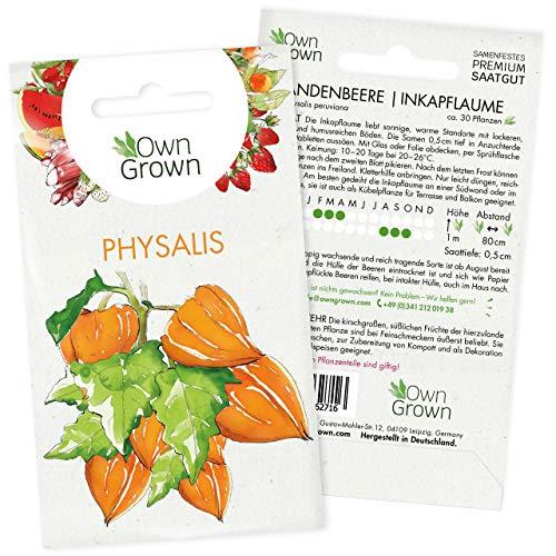 Physalis Samen: Premium Andenbeere Samen für ca. 30x Andenbeere Pflanzen – Kapstachelbeere Pflanzen Samen – Saatgut Physalis, Obst Samen – Frucht Samen für Physalis Pflanze winterhart von OwnGrown