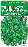 サカタのタネ 実咲野菜3679 フリルレタス(緑) フリンジーグリーン 00923679