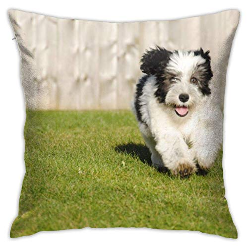 Funda de almohada para perro, perro pastor, cachorro, adorable, peludo, correr, estilo polaco, decoración de cojín con 45,7 x 45,7 cm