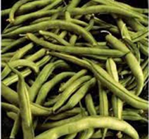 Semilla de frijol, COMODORO BUSH, herencia, orgánico más de 100 SEMILLAS, NO OGM, judías verdes