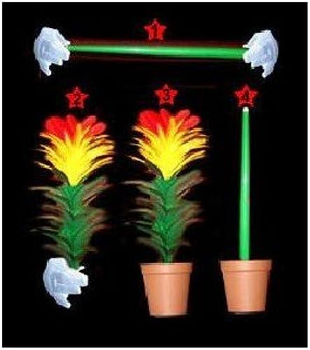ventas en línea de venta TORA MAGIC MAGIC MAGIC - De bastón a Flor y de Flor a bastón en Maceta  ahorre 60% de descuento
